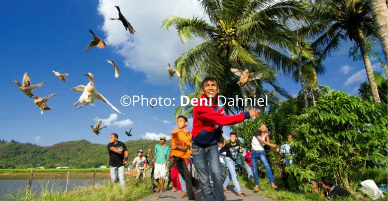 Pacu Itiak: Olahraga Tradisional yang Unik dari Minangkabau