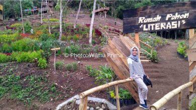 Photo of Menikmati Alam dan Buku di Rumah Pohon Literasi Pagaruyung