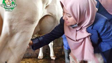 Photo of Wisata Sehat, Peternakan Sapi Serambi Milk di Padang Panjang