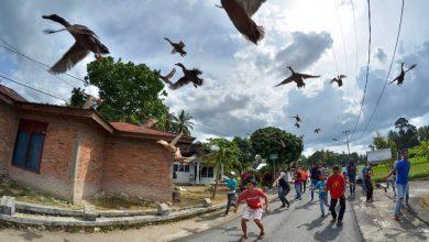 Photo of Balapan Itik: Ketika Itik Seperti Merpati