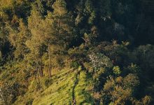 Photo of Pesona Bukit Bukua, Pilihan Wisata Alam Baru yang Instagramable